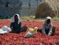 local women farmers